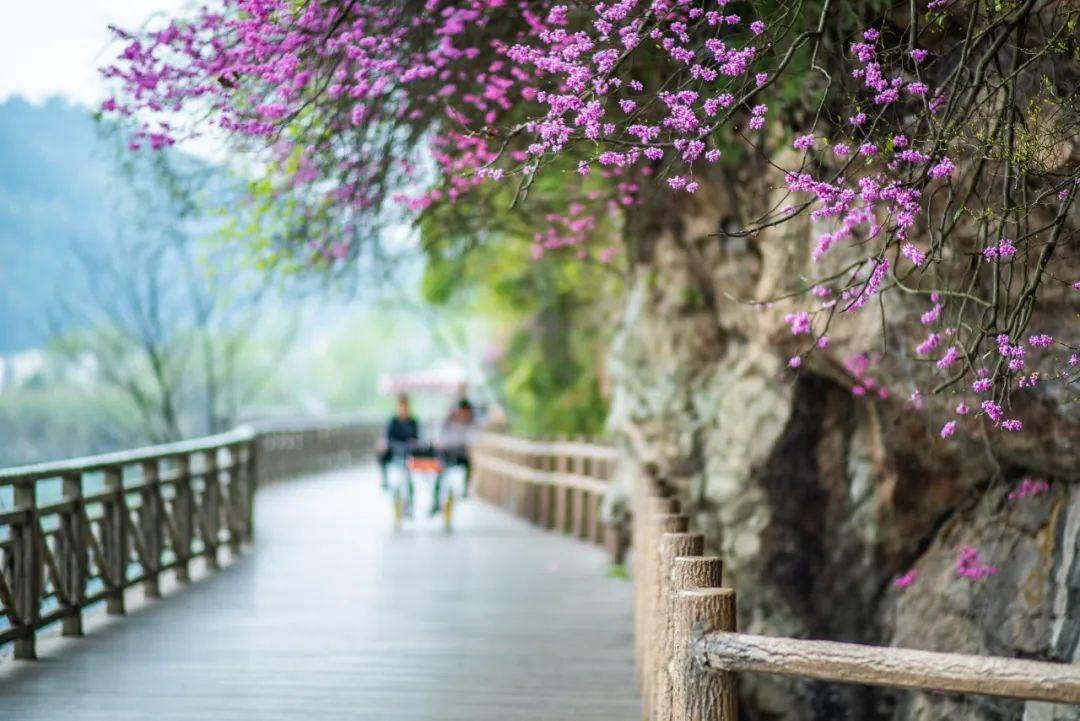 刚宣布免费,台州这些景区上周末就迎来超20万游客!