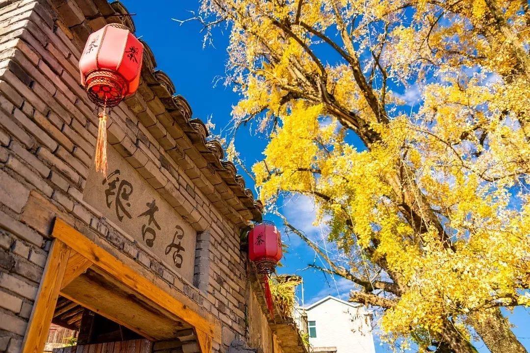 台州最西部乡野秘境:千年银杏黄,深藏故乡的模样!