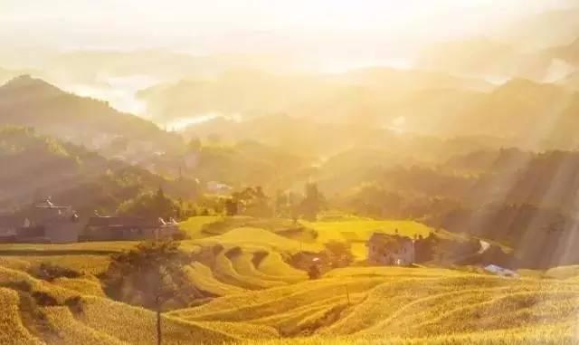 層層疊疊的梯田,是黃坦一道曼妙的風景,千畝梯田,從山腳攀爬到山頂,圈