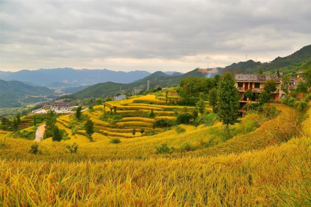 在秋收的稻田,邂逅臺州最曼妙的田園風