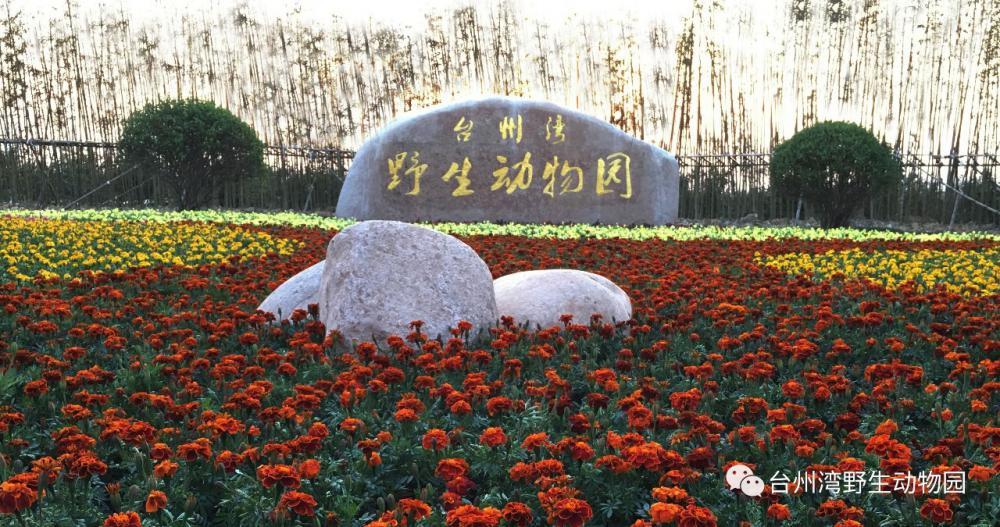 台州湾野生动物园正式开园